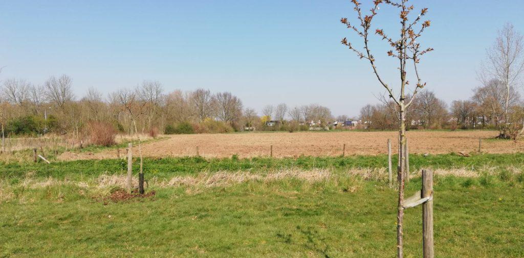 Akkerranden ingezaaid met bloemrijk graslandmengsel